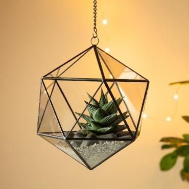 Ultra Cubeism Terrarium 19x19x21cm Premium Quality Glass Terrarium Terrarium Perfect for Moss and Plants or Decorations