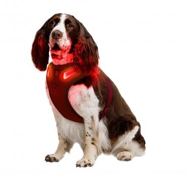 Medium A Line Red Dog Harness USB Rechargeable LED Dog Harnesses Light Up Harness Anti Pull Safety Harness Light Up Dog Harness Bright Flashing Harness Hi Vis Dog Vest Illuminated Dog Jacket