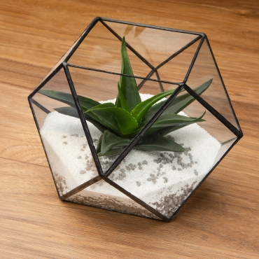 Pentagon Ball Shaped Glass Terrarium Planter For Air Plants Cactus Small Succulents Or Wedding Table Centrepiece or Gift for a Modern Home Geometric