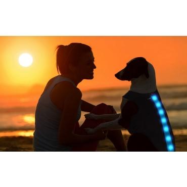 Blue Waterproof Dog Coat LED Jacket Dog Raincoats Waterproof for Night Time Walking Visibility Dog Rain Mac Fluorescent Dog Coats LED Dog Coat