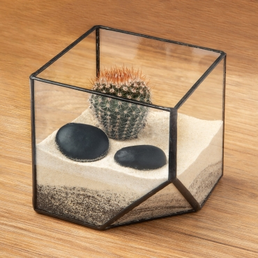 Square Cube Shaped Glass Terrarium Planter For Air Plants Cactus Small Succulents Or Wedding Table Centrepiece or Gift for a Modern Home 10x10x10